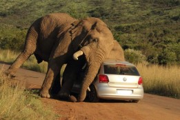 Image result for elephant itch